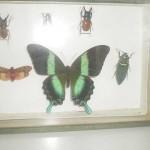 Caja expositiva de insectos